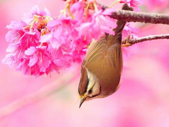 beautiful pink bird